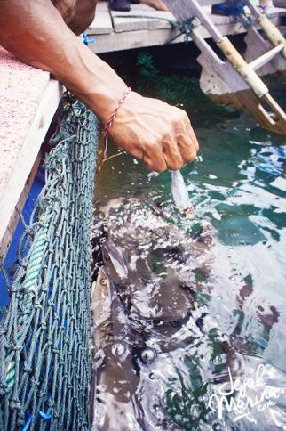 Bali_Sharks_Serangan_06