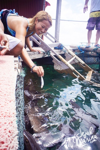 Bali_Sharks_Serangan_07