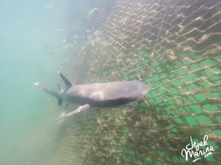 Bali_Sharks_Serangan_15