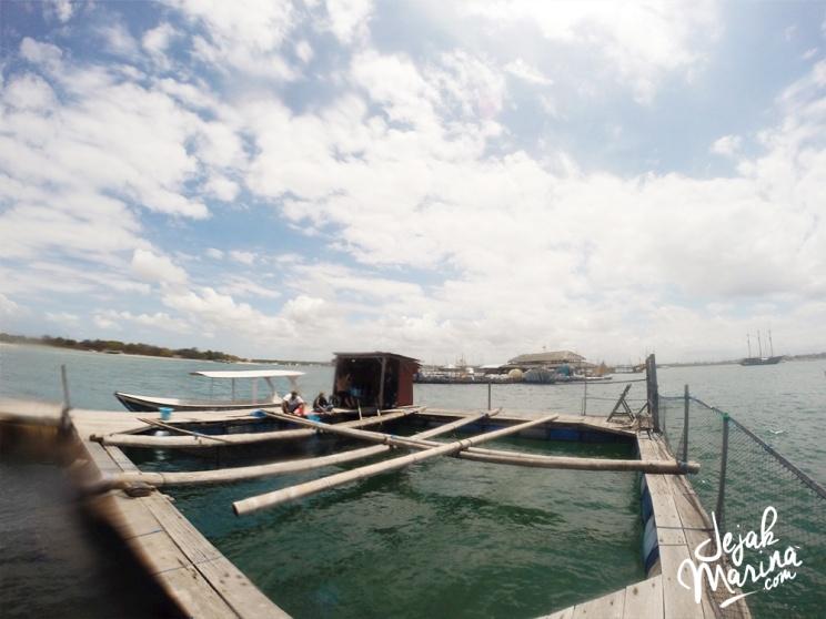 Bali_Sharks_Serangan_21